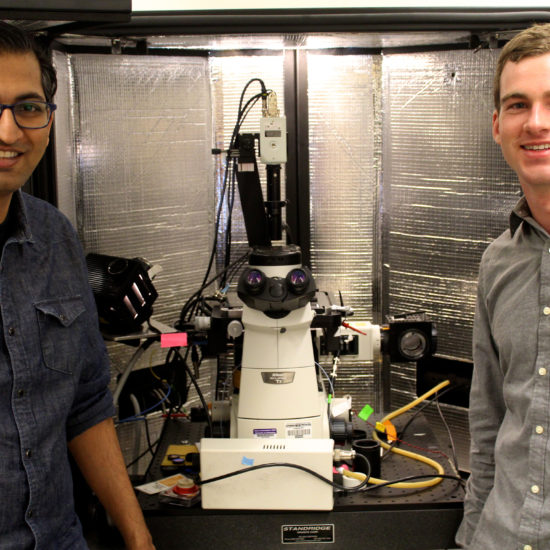 , Researchers Uncover Design Principles for Polymers that Can Transport Both Ions & Electrons