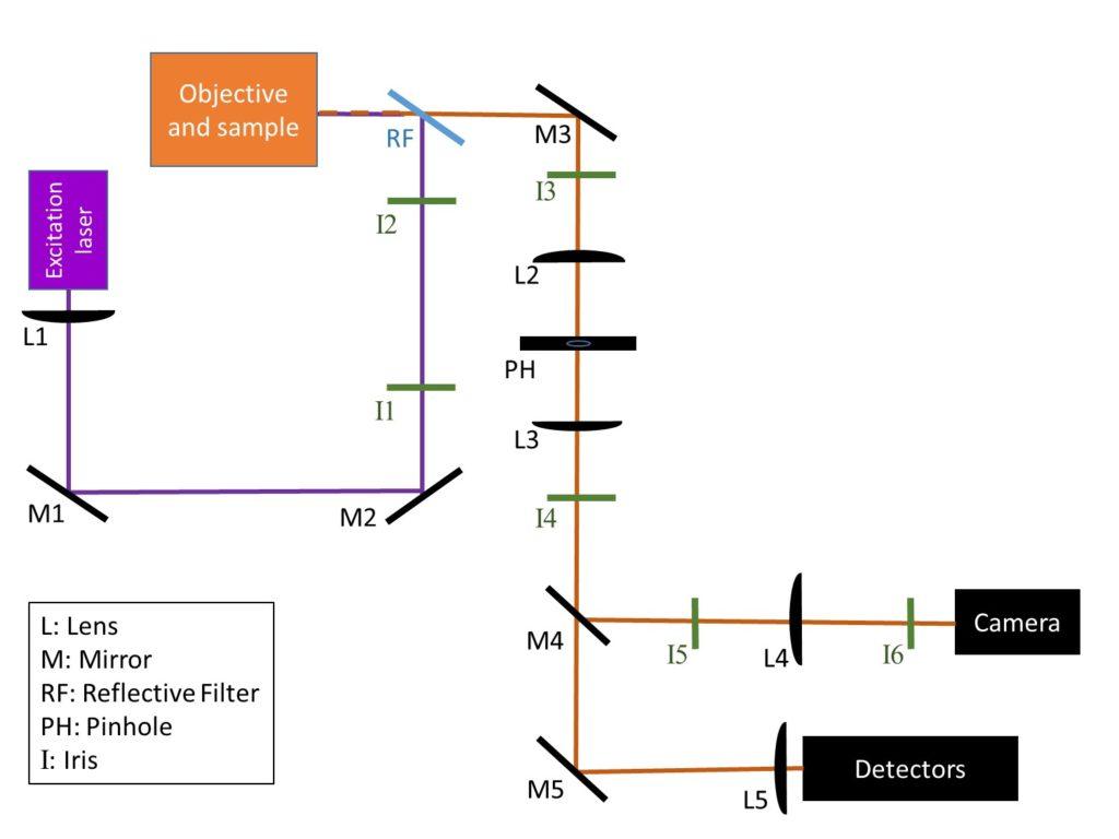 , Confocal Microscope Alignment